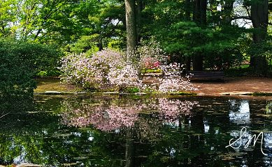 mirrored spring park nature