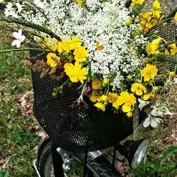 wppwheels flowerbouquet road way gift
