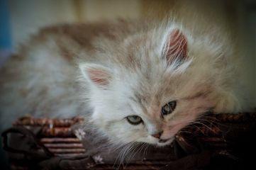 freetoedit cat pets petsandanimals photography