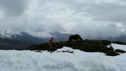 horse horses snow snowcape clouds