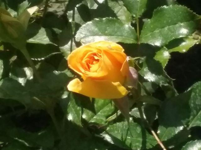 wppflowers