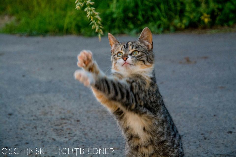 #colorful #cute #emotions #nature #petsandanimals #Katze #cat #cats #dpccats