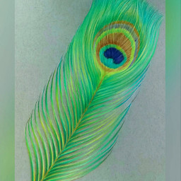 pencilart colorful peacock