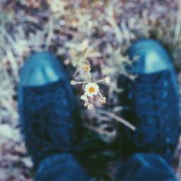 bokeh colorful emotions flower love freetoedit