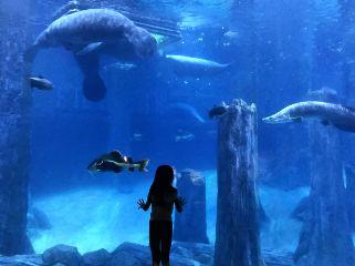 wppshowmethesea zoo sea aquarium