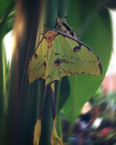 butterfly butterflies interesting colour colours