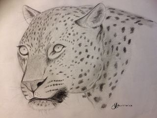 animal drawing bw blackandwhite leopard