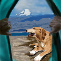 wdpcamp view dog petsandanimal mountain