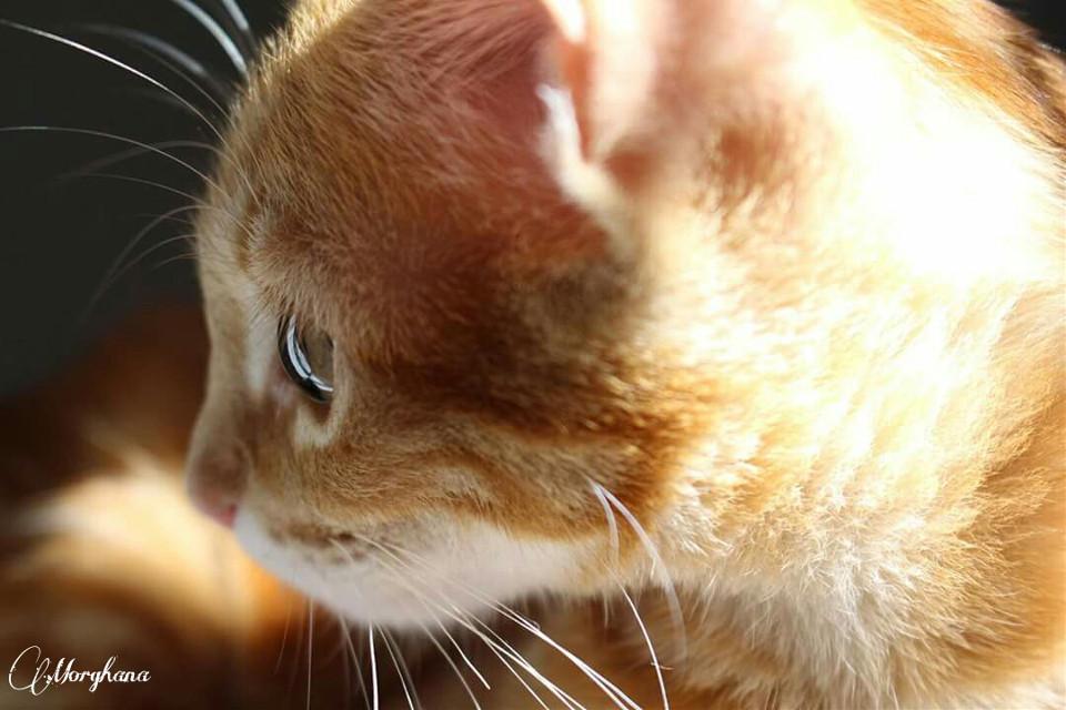 Meu pequenino! #mylittlebaby #kitty #cute #heiscaramel #asweet #inlove  #takeapic  😻😻😻