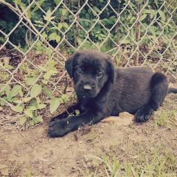 dogslife cute innocent