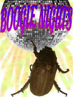 freetoedit boogie bug dancing nights