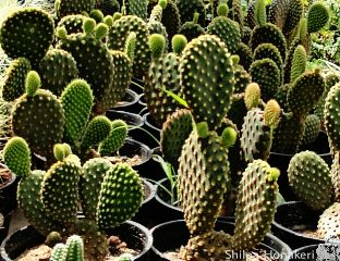 cactus green garden colorful emotions