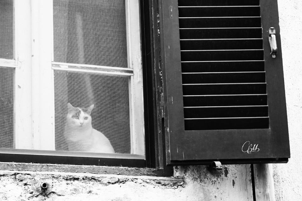 Morning..  #blackandwhite #cat #window
