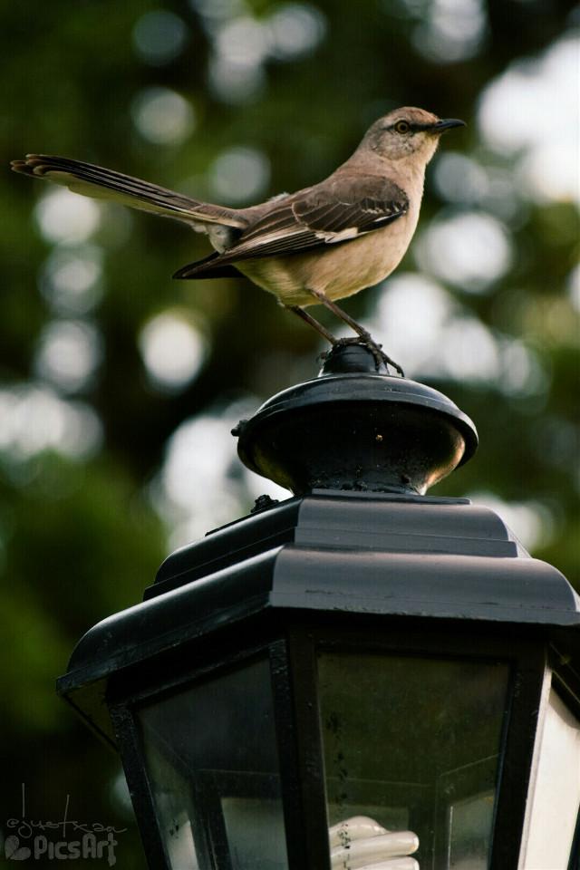 #wildandwinged #nettesdailyinspiration #nature #petsandanimals #birds