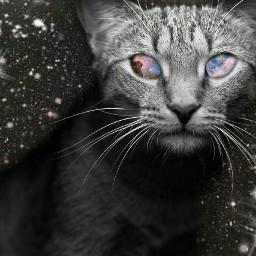 wapsparklers cat cute photography retro vintage popart petsandanimals nature emotions colorsplash blackandwhite bokeh galaxy cosmic cosmical overlay screen freetoedit