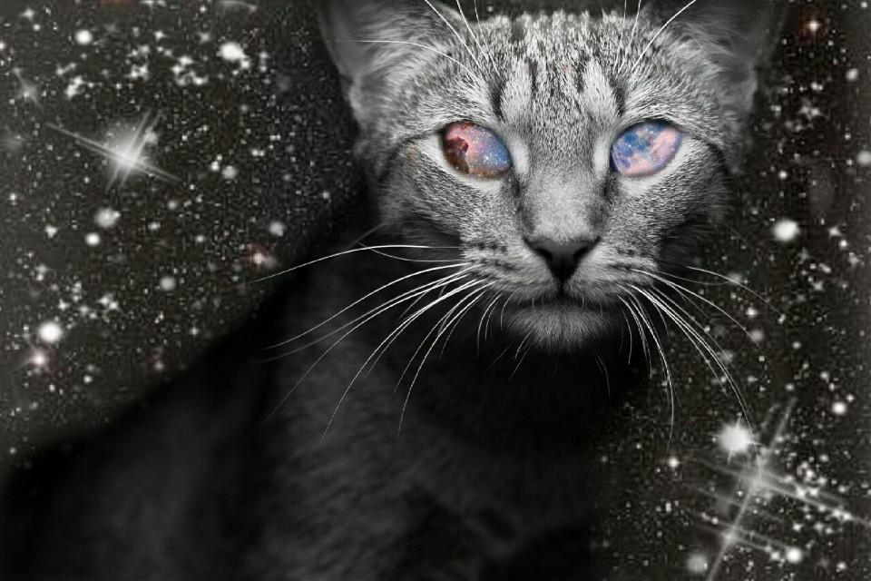 #wapsparklers VOTE ME PLEASE ✌ I vote back 👄 #cat #cute #photography #retro #vintage #popart #petsandanimals #nature #emotions #colorsplash #blackandwhite #bokeh #galaxy #cosmic #cosmical #overlay #screen  #freetoedit