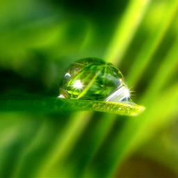 cute rain nature macro