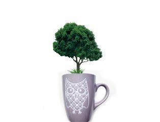interesting remix nature remixed tree