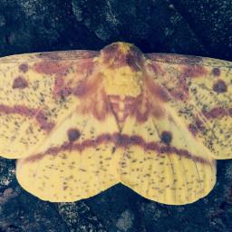 moth nature yellow soft wppflatlay