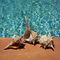 conchshell bluewaterbackgroud keepitsimple photography