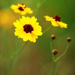 feature nettesdailyinspiration backgroundblur nature summer freetoedit