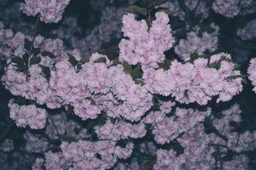 flowers blossom pink nature night freetoedit