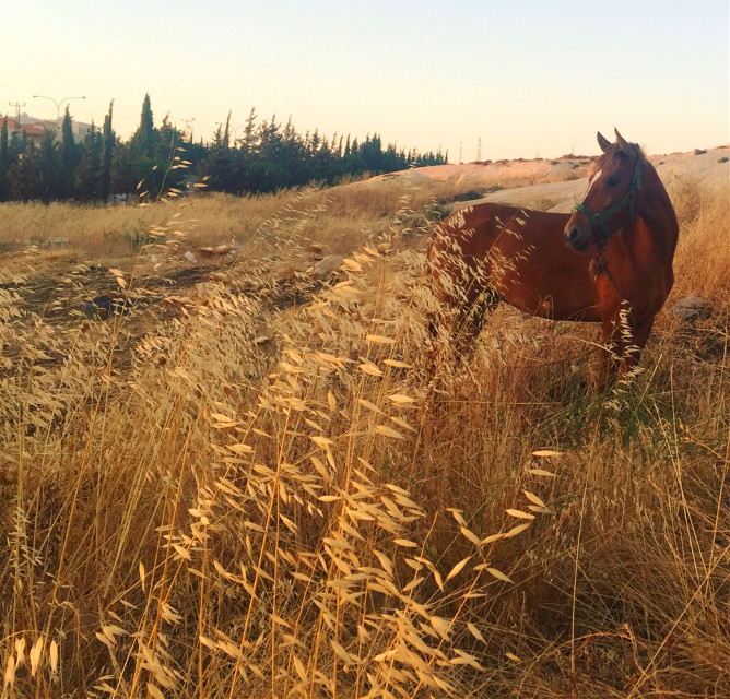 The wind of heaven is that which blows between a horse's ears.  ~Arabian Proverb  #horse #photography #FreeToEdit