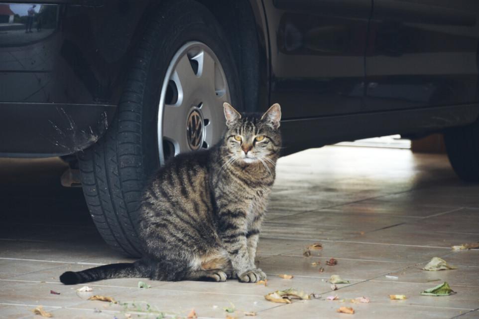 Neighbours cat 😃 #cat #animal