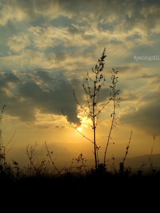 #photography #nature #sunset #sky #summer