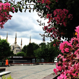 istanbul nature flower pink mosque