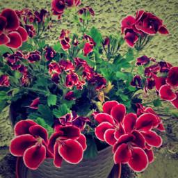 flowers our garden inspiration