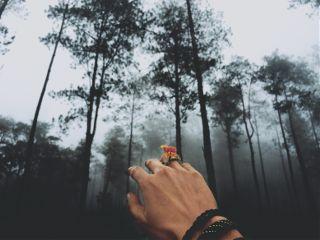 freetoedit woods hand woman fog