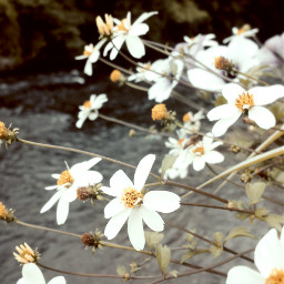 beautifulbelgium retrofilter waveywater amazingardennes ownphotography wppfloralcanvas freetoedit