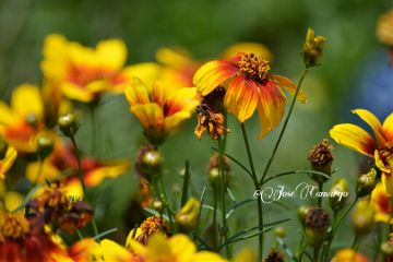 colorful flower nature nikon photography