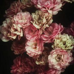 little roses vintage beauty romantic