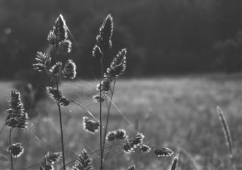 photography blackandwhite summer light freetoedit