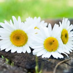 wppfloralcanvas interesting beautiful flowers contest