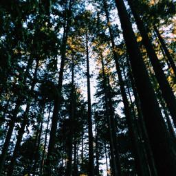 forest trees oregon nature vscocam