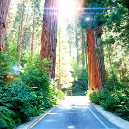 nature sequoianationalpark photography vacation2016 freetoedit