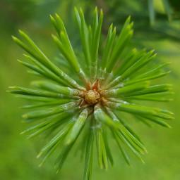 nature mygarden myinspiration