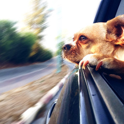 interesting art photography travel dog freetoedit