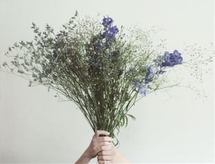 flowers photography thankful minimal thankyou dpcflowers freetoedit