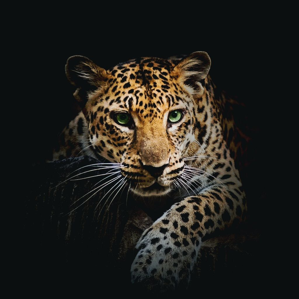 Either this is a jaguar leapord or puma animals backgr - Jaguar wallpaper for android ...