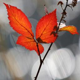 freetoedit beautifulnaturecolors