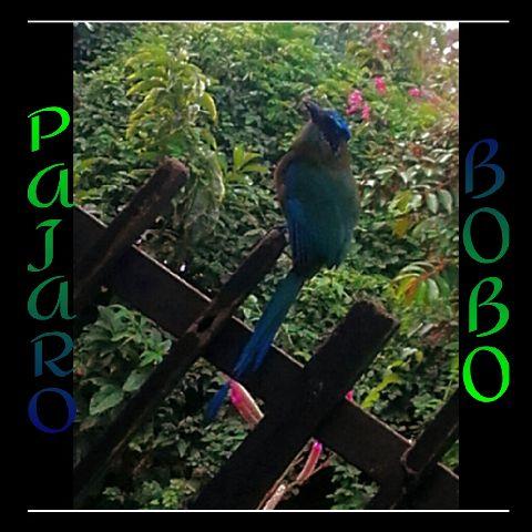 #freetoedit,#pajarobobo,#ilovethis,#photography
