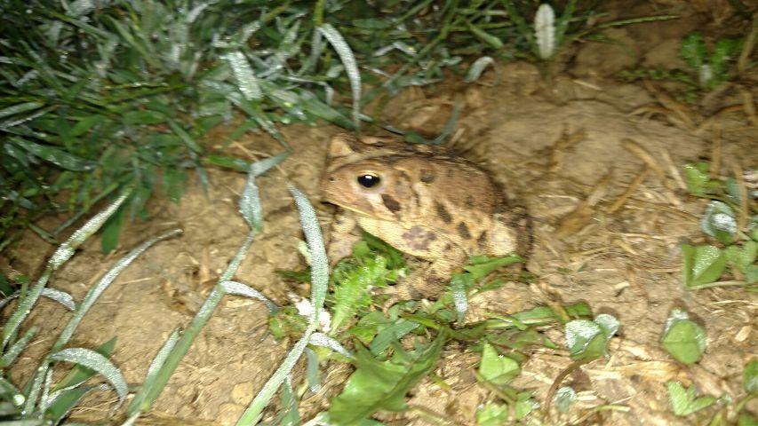 #animal,#toad,#photography,#amphibian